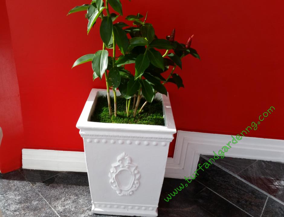 Beautiful Flower Pot,PHC